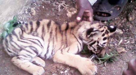 NTCA, SOP, Ranthambore tiger reserve , Udaipur Biological Park, Rajasthan Chief Wildlife Warden, National Tiger Conservation Authority, india news