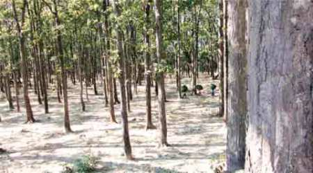 In fact: Looking behind the numbers on India's 'stable' forestcover