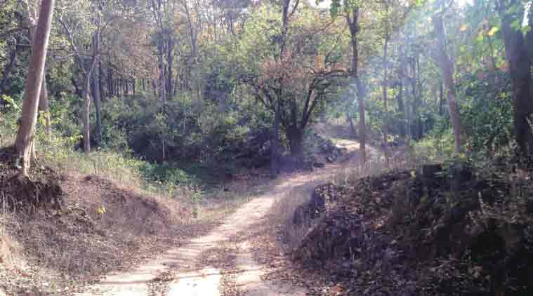 Mid-Dense Forest in Palamu Tiger Reserve, Jharkhand. (Express Photo by: Jay Mazoomdaar)