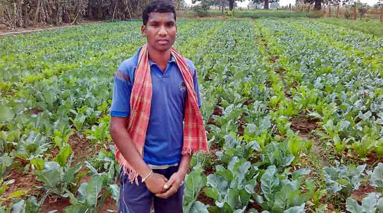 Balram Gond standing before his crop of cauliflower and tomato.   (Express Photo by: Debabrata Mohanty)