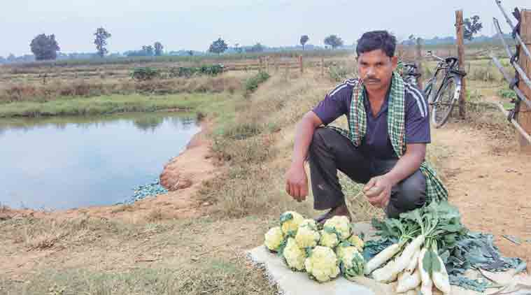 Subran Gond with his harvest of cauliflower.   (Express Photo by: Debabrata Mohanty)