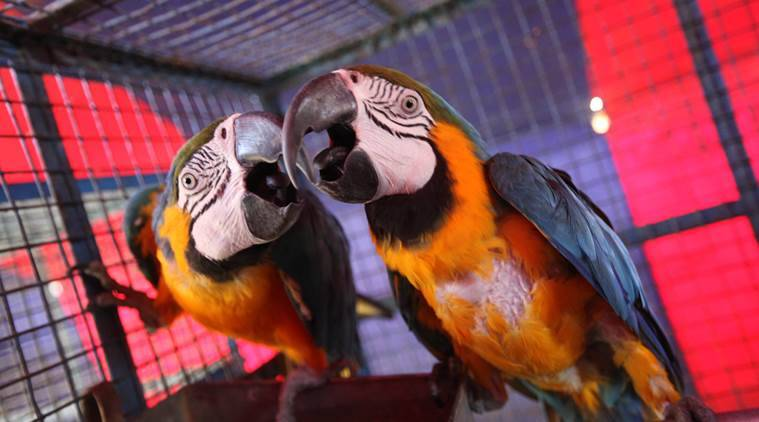 caged birds, caged birds verdict, delhi hc caged bird verdict, freedom of birds, freedom of caged birds, birds as pets, laws for birds as pets in india, india news, latest news, indian express column