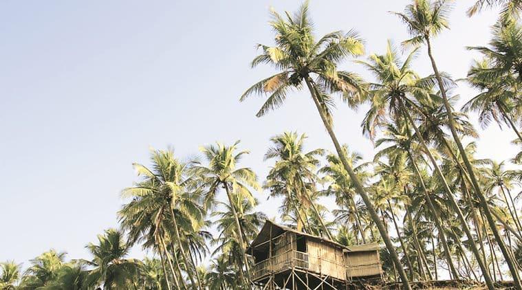 India, Goa, beach huts on Palolem Beach, low angle view