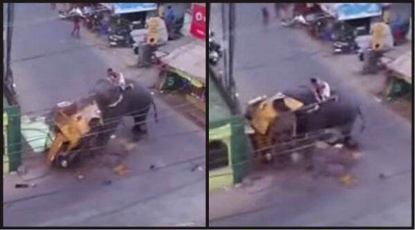 Elephant on rampage in Kerala/ Screenshot