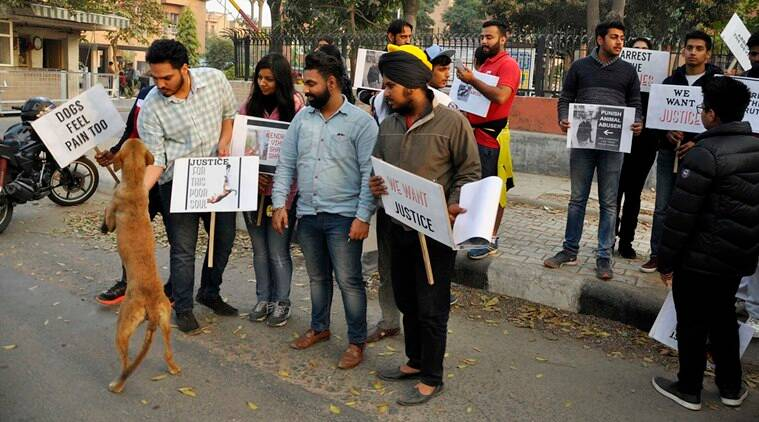 Animal cruelty, animal torcher, Chandigarh animal cruelty, animal cruelty accused arrested, Chandigarh Animal cruelty accused arrested, Animal welfare board, animal protection, animal rights