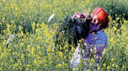 Govt aims to bring 50% farmers under PMFBY in next fewyears