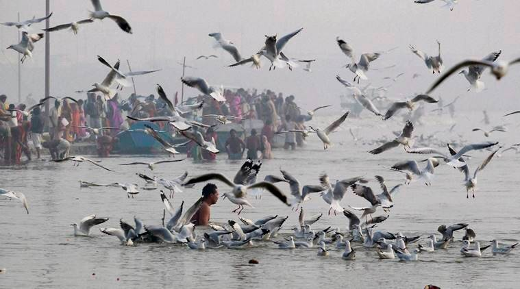 Allahabad: Hindu devotees take holy bath in the Sangam of rivers, the Ganga, the Yamuna and mythical Saraswati early in the morning in Allahabad on Friday. PTI Photo (PTI1_8_2016_000070A)