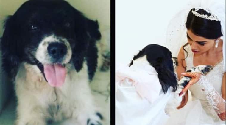Genelia Deshmukh, Genelia Deshmukh movies, Genelia Deshmukh twitter, Genelia Deshmukh dog, Genelia Deshmukh dog's deth, Genelia Deshmukh latest news, entertainment news