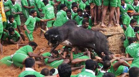Supreme Court junks Jallikattu organisers' plea, interim ban to remain