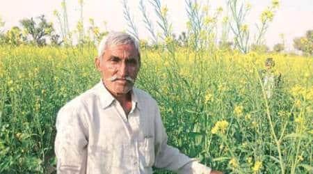 BKS, BJP Kisan Morcha among groups opposed to GMmustard