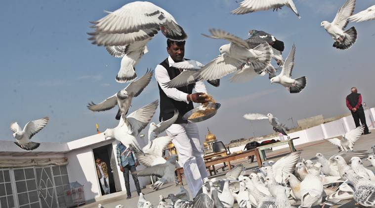 agra pigeon contest, agra pigeon contest cancelled, AWBI, animal Welfare Board of India, lucknow news, delhi news, india news,