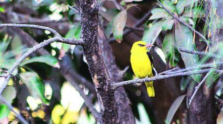 Wild Side: Catching up with city'sbiodiversity