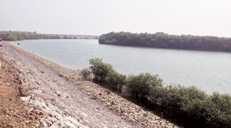 saline embankment, sunderbans, odisha sunderbans, india news, sunderbans floods, sunderbans tigers,