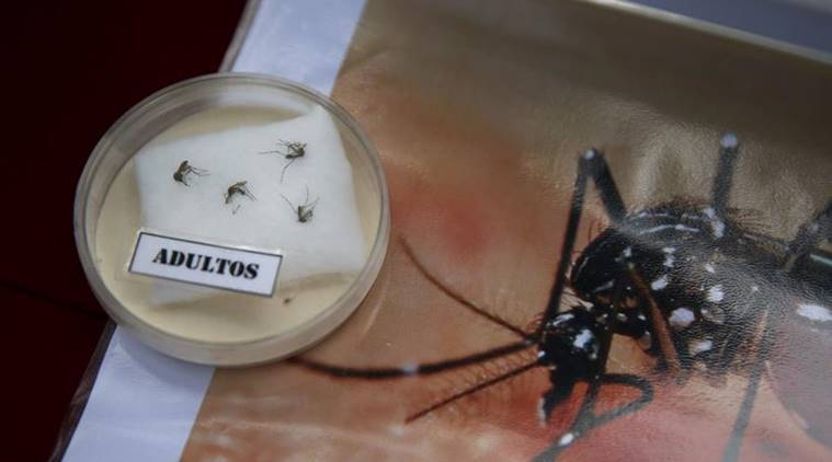 Specimens of Aedes aegypti mosquito are exhibited during a campaign to raise awareness of preventing the entry of the Zika virus into the country, at the Health Ministry in Lima, Peru
