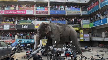 Siliguri: People watch an elephant damaging vehicles outside a shopping mall in Siliguri on Wednesday. PTI Photo(PTI2_10_2016_000057B)