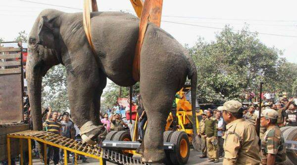 Elephant ran amok in West Bengal/ PTI