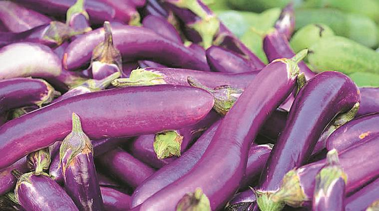 Panel to inspect Bt brinjal 'sowing' in Haryana farms