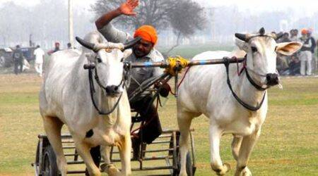 Kila Raipur sports festival: 'Rural Olympics' begins today, animal welfare board to watch out forviolations
