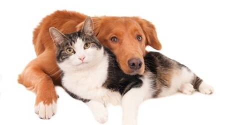 It's official: Dogs are more loving than cats, says study