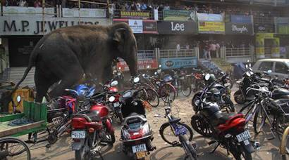 Elephant in the city: Jumbo rampages Siliguri town, smashing homes
