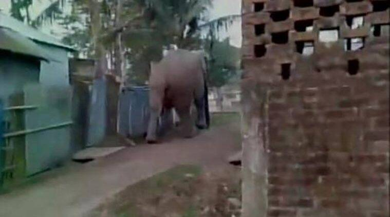 Panic-stricken people started running helter skelter and Forest personnel rushed to the spot to drive away the pachyderm to the forest. (Source: ANI)