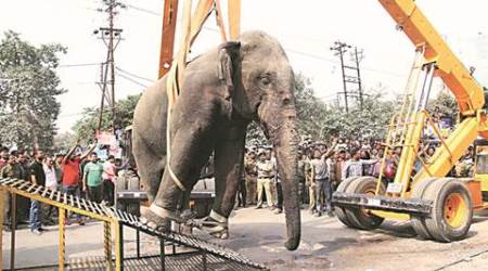 Wild tusker runs amok in Siliguri, damages houses, flattens vehicles