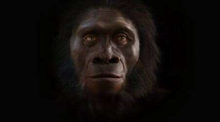 Watch: The evolution of man's face over 6 million years, in under 2mins