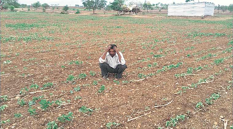report on farmer suicide Agriculture: farmers' suicide - 2015 insurance in farmer friendly manner are some of the suggestions made by him report, said it expected.