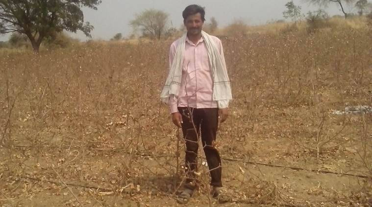 Shivaji Gajar (40), a marginal farmer, in his farm in Gundewadi village of Jalna district on Monday afternoon. His cotton crop, like that of hundreds of farmers in Jlana, has withered away due to lack of rains in the district. Express photo by Santosh Musale