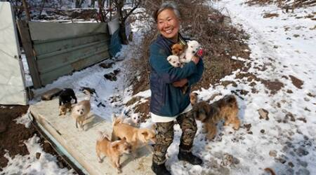 In this Wednesday, Jan. 27, 2016 photo, Jung Myoung Sook, 61, holds her puppies she rescued at a shelter in Asan, South Korea. In the country, where dogs are considered a traditional delicacy and have only recently become popular as pets, Jung's love for her canine friends is viewed by some as odd. But others see her as a champion of animal rights. (AP Photo/Lee Jin-man)