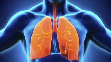 lung like tissue, 3 d, lung diseases, thre dimensional, lifestyle news, indian express,