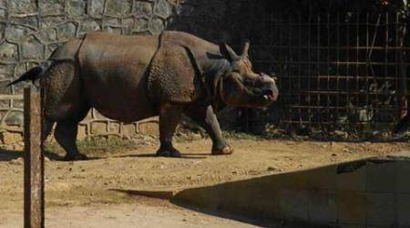Delhi Zoo all set to welcome Ayodhya, the rhinoceros
