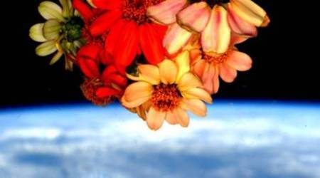 Have you seen astronaut Scott Kelly's Valentine's Day space flowers?