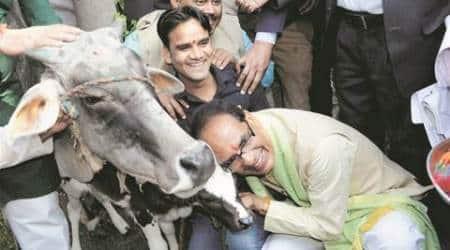 Shivraj Singh Chouhan, gaushala, cow milk, beef ban, MP chief minister