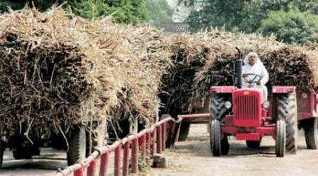 FRP: Govt may crack down on sugar mills not adhering to 80:20 formula
