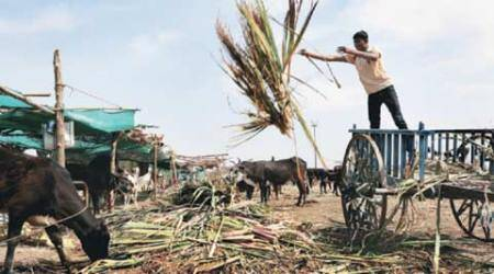 Cattle feed to tankers: Why it's hard for relief to reach and bemonitored