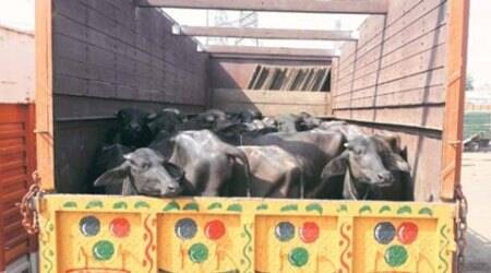 Jharkhand: Two Muslim cattle traders found hanging from tree inLatehar