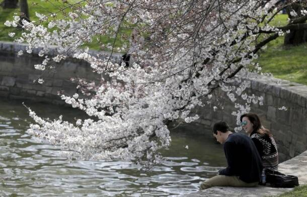 Spring is here; and so are the beautiful cherry blossoms