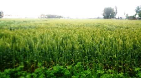 Rains lash parts of Har, Pb; worry farmers