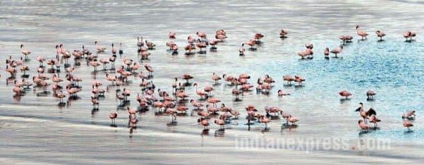 Flamingo, Flamingo Festival, Flamingo Point, Flamingos in Mumbai, Flamingos in india, Flamingo Pics, Flamingo photos