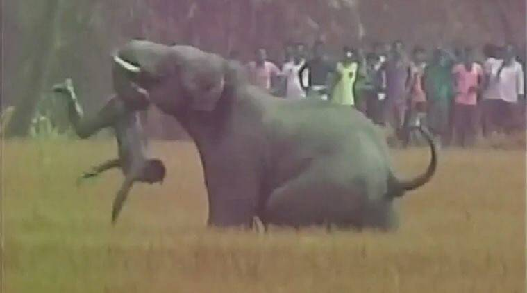 viral video, elephant attacks man, brutal attack, elephants on rampage, Kashpur, Monteswar, West Bengal, Burdwan