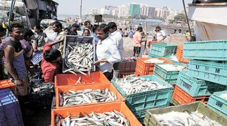 Youngsters from fishermen families to work as 'naturalists' at marinecentre