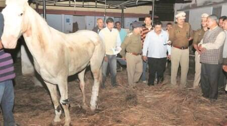 Maneka Gandhi demands BJP MLA's expulsion for attack on horse