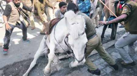 Leg of Uttarakhand Police horse, who was attacked by BJP MLA, amputated