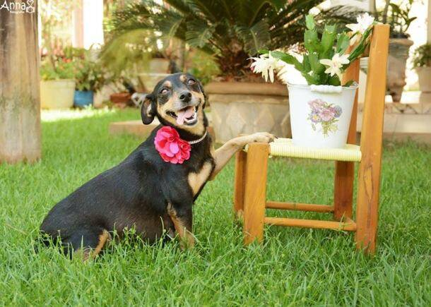 Pregnant dog's maternity photoshoot is the cutest thing you'll see today