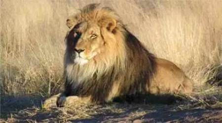 Lion kills labourer in Gujarat's Amreli district