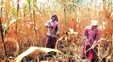 Waterless in Marathwada: Farm crisis is extra hard on women