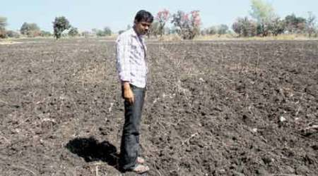 Opium crop failure: No high for these farmers in times ofdrought