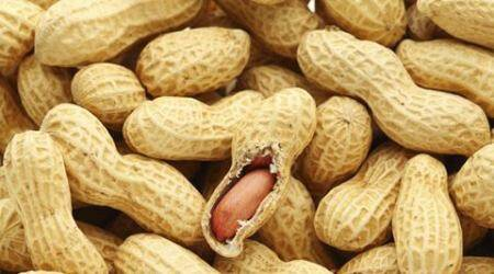 Obese? Eat peanuts to loseit