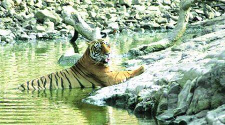 Rajasthan wants tourists all day, and night, at Ranthambore